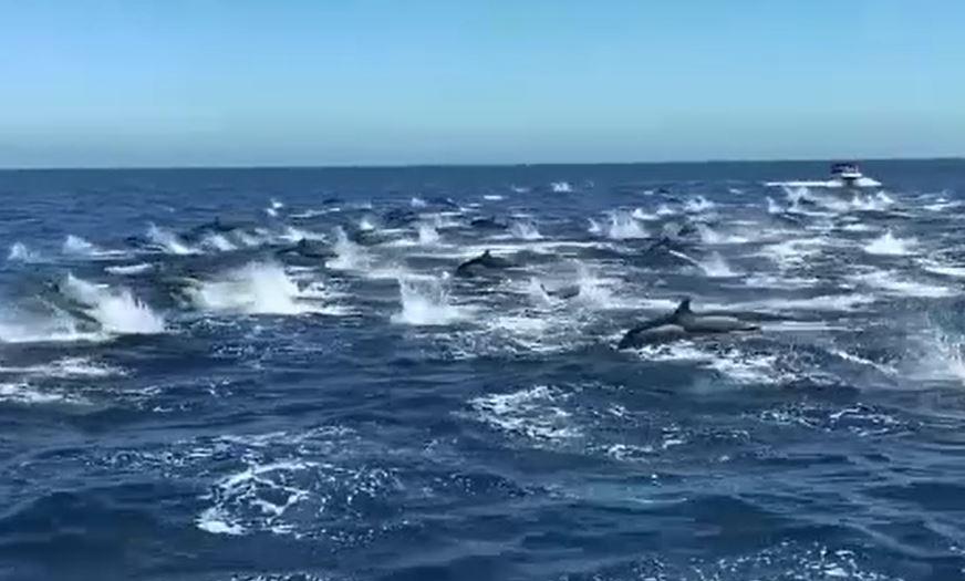Fenomen macabru. Zeci de delfini măcelăriți, găsiți pe plaje de turiști