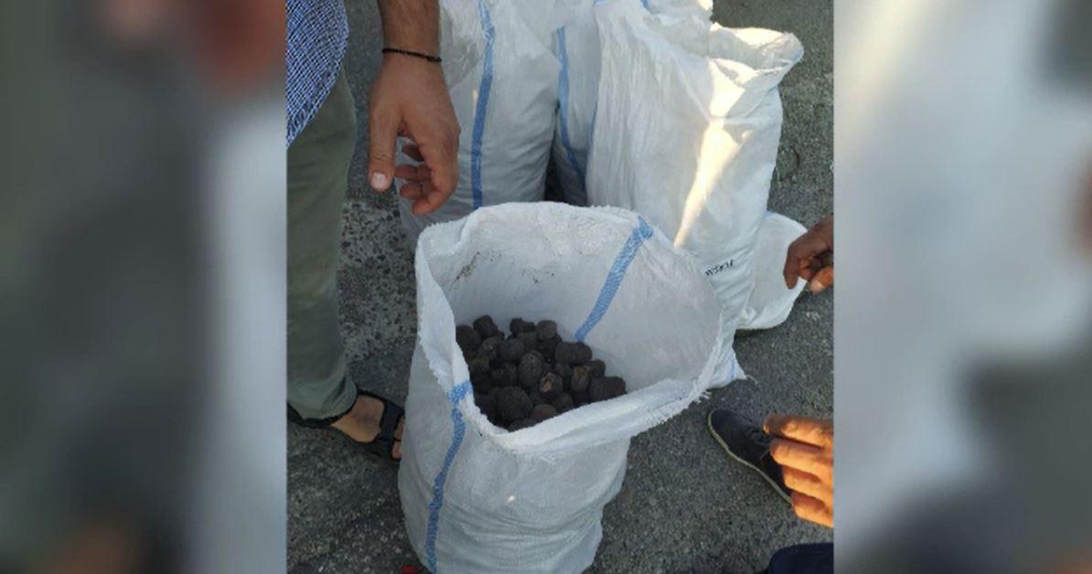 Captură impresionantă în Bacău. Polițiștii au descoperit într-o mașină 140 kg de trufe