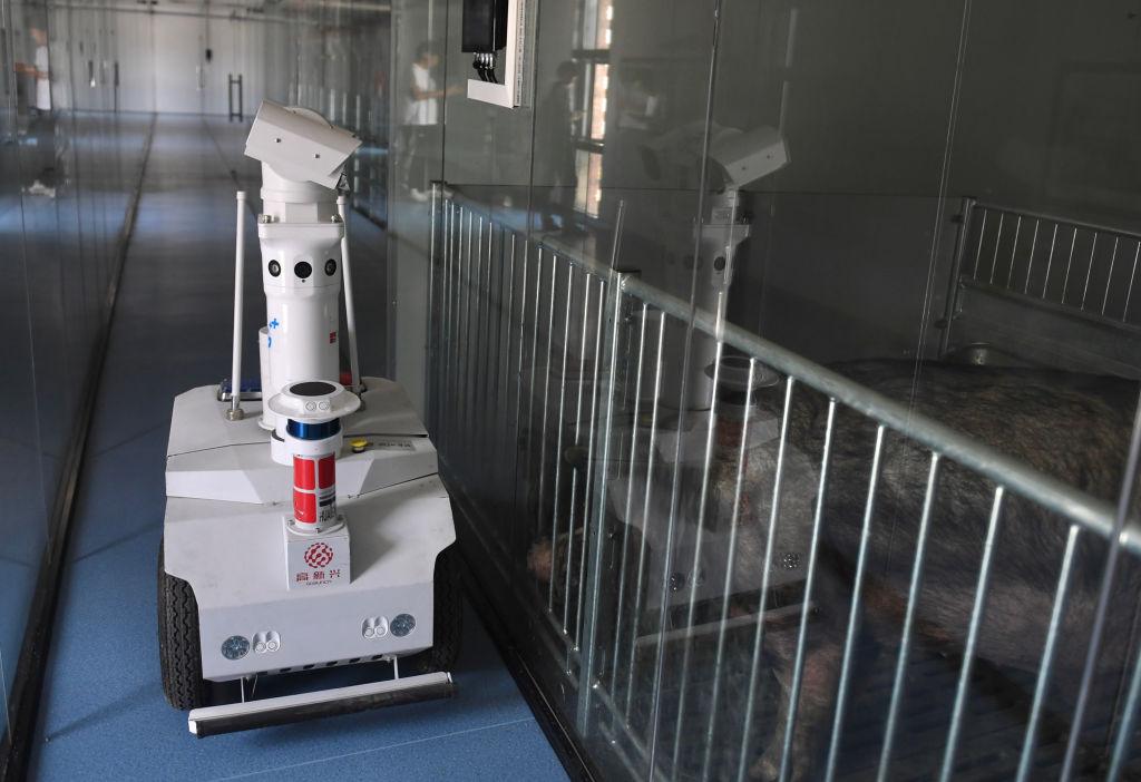 În China au apărut hotelurile pentru porci. Motivul pentru care suinele sunt ținute în condiții de lux la etajul 13