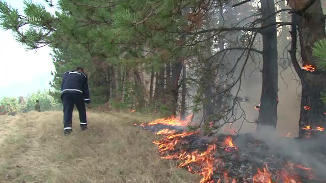 Incendiile de vegetație fac ravagii și în România. Focul poate izbucni și de la o sticlă aruncată pe câmp