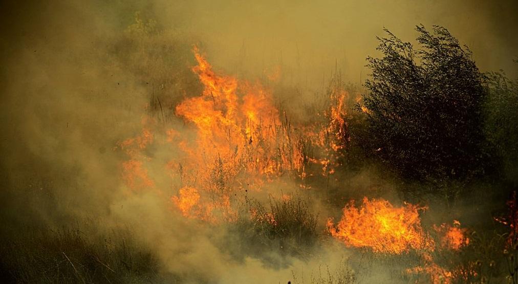 Tragedie în Bulgaria. Doi oameni au murit într-un incendiu forestier