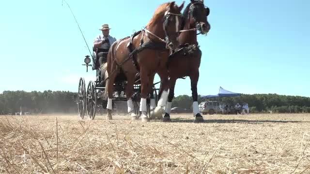 Una dintre cele mai importante competiții de atelaje trase de cai din România a avut loc în Bihor