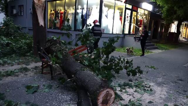 Natura s-a dezlănțuit în Baia Mare. Un bărbat care aștepta autobuzul a fost lovit de un copac