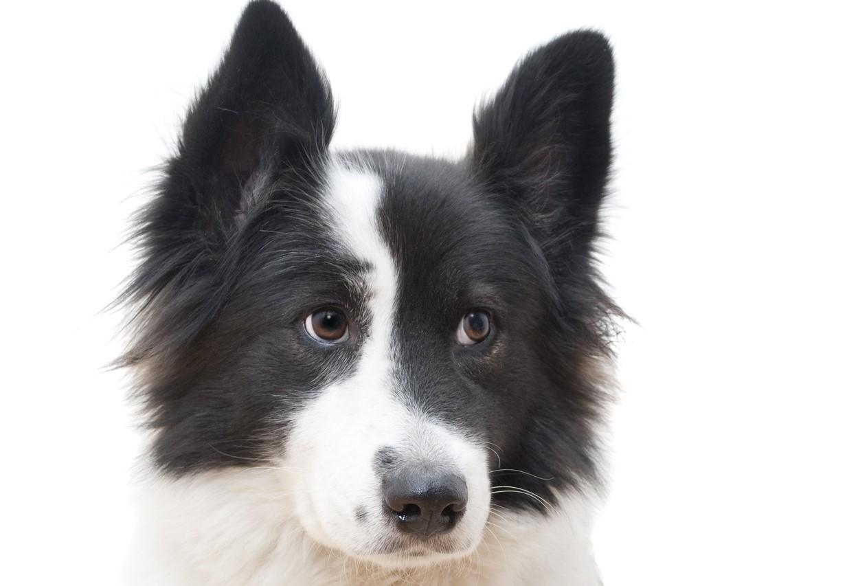 """Un câine a fost lăsat să moară de cald într-o mașină, la soare: """"Nu-mi pasă. Vreau să moară"""""""
