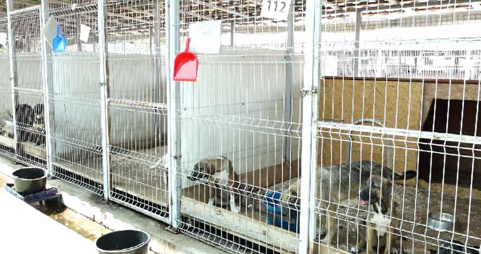 Mai mulți câini, furați de la un adăpost din Baia Mare. Ce planuri aveau tâlharii cu ei
