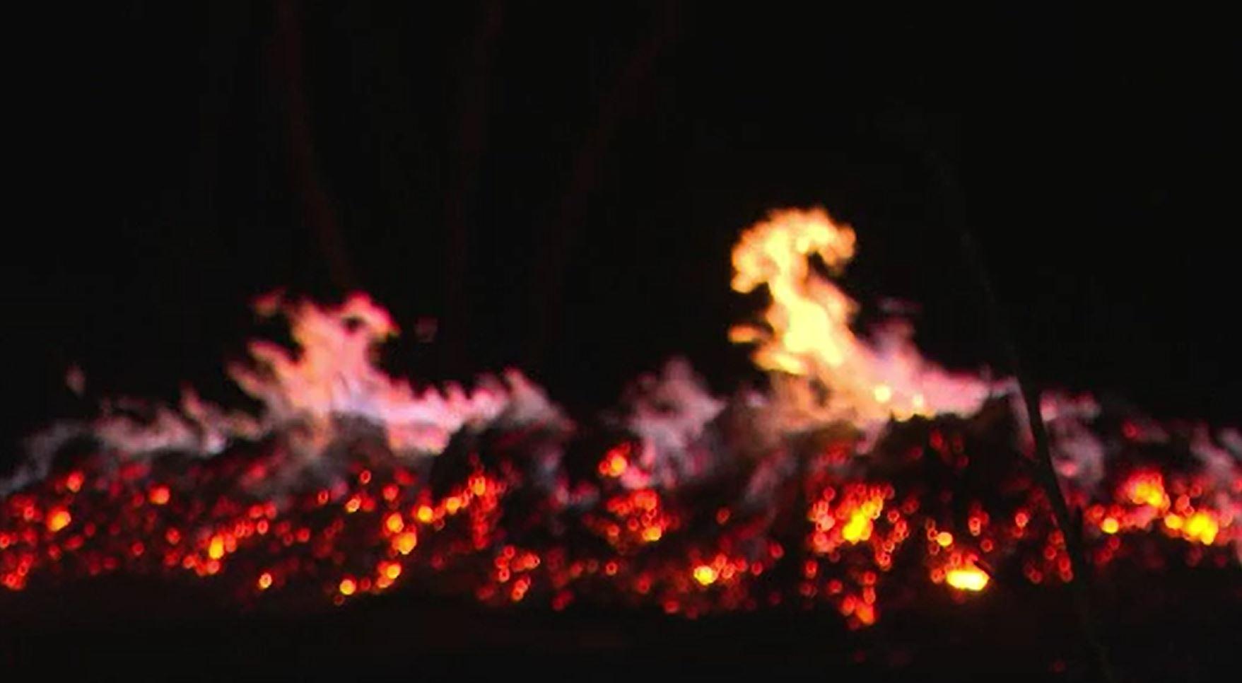 Incendiile de vegetație produc pagube uriașe și în România. Sute de hectare de pământ au fost devastate de flăcări