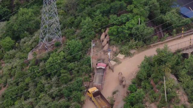 Elefanții călători se întorc acasă. Peste 150.000 de oameni au fost evacuați din calea lor