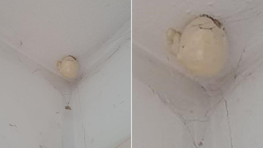 """""""Oul"""" bizar apărut pe tavanul unei camere. Nimeni nu a reușit să își dea seama ce este în imagine"""