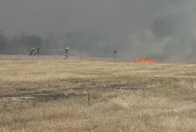 Incendiile de vegetație pot să ne aducă oricând în situația Greciei. Pompierii au stins hectare întregi, peste noapte