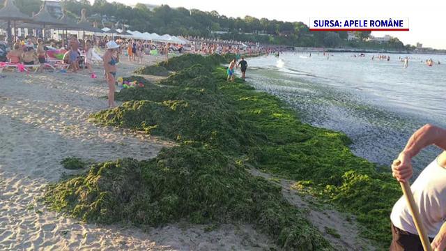 Sudul litoralului s-a umplut de alge. Lucrătorii de la Apele Române au adunat deja 4.500 de tone