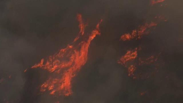 Incendiu de vegetație la marginea Ierusalimului. Autoritățile au emis ordin de evacuare