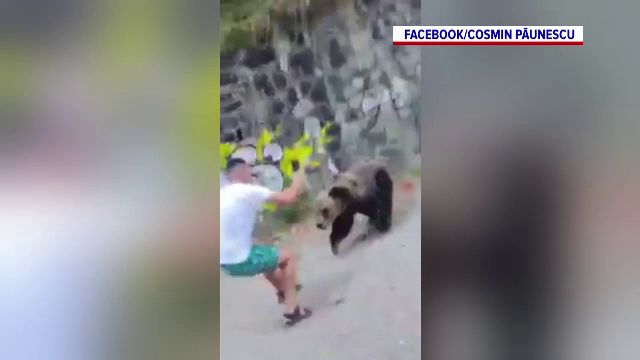 Un turist, la un pas să fie rănit de un urs. Animalul stătea lungit, dar bărbatul a insistat să il filmeze