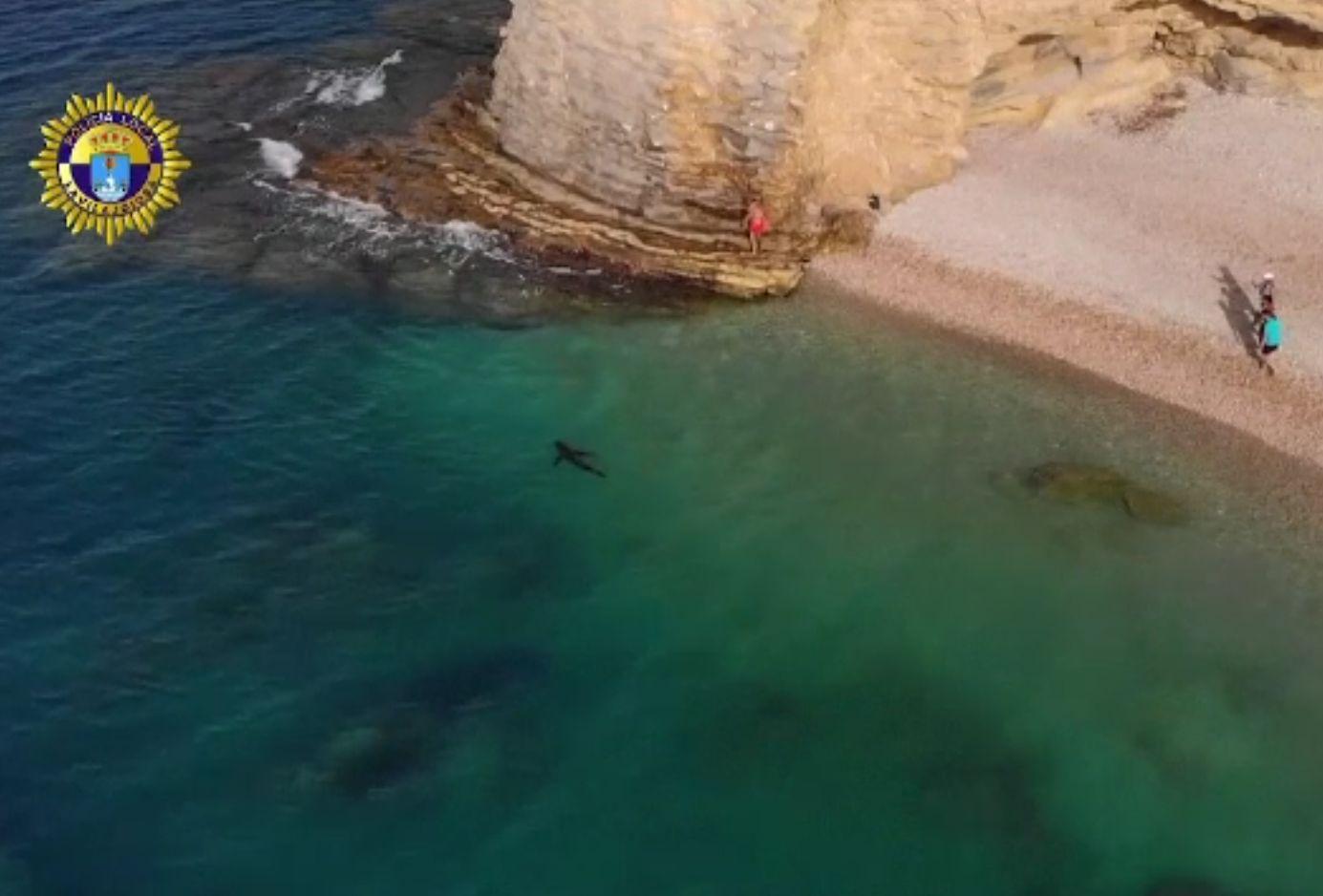 Un rechin imens a apărut pe o plajă din Alicante. De ce l-au cruțat autoritățile