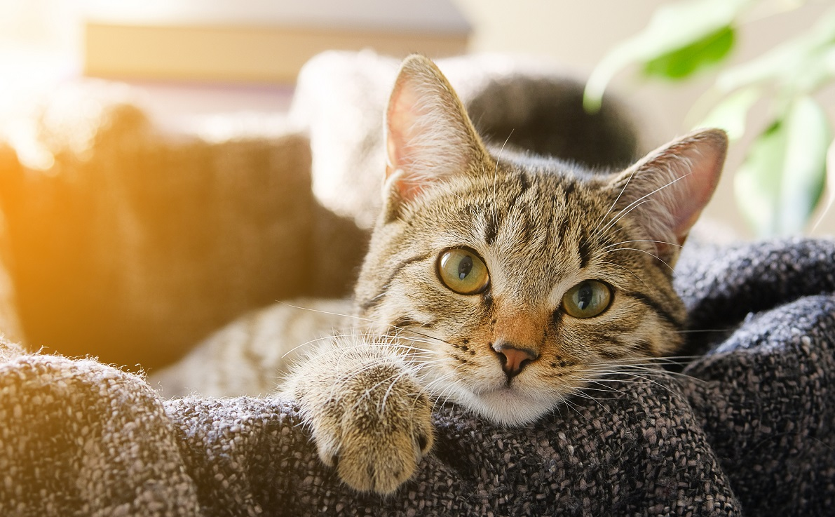 O pisică i-a salvat viața stăpânului ei, după ce a atras atenția vecinilor