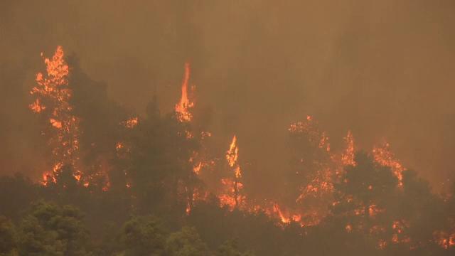 Incendiile de vegetație continuă să facă ravagii în Europa. Mii de pompieri se luptă cu flăcările