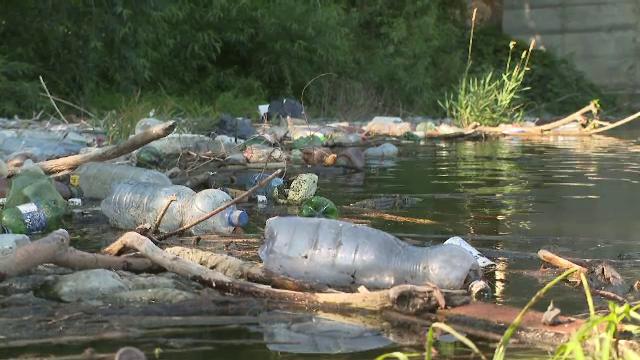 Păsările, afectate de poluarea din Delta Dunării. Voluntarii care ajută la curățarea zonei au parte de o surpriză