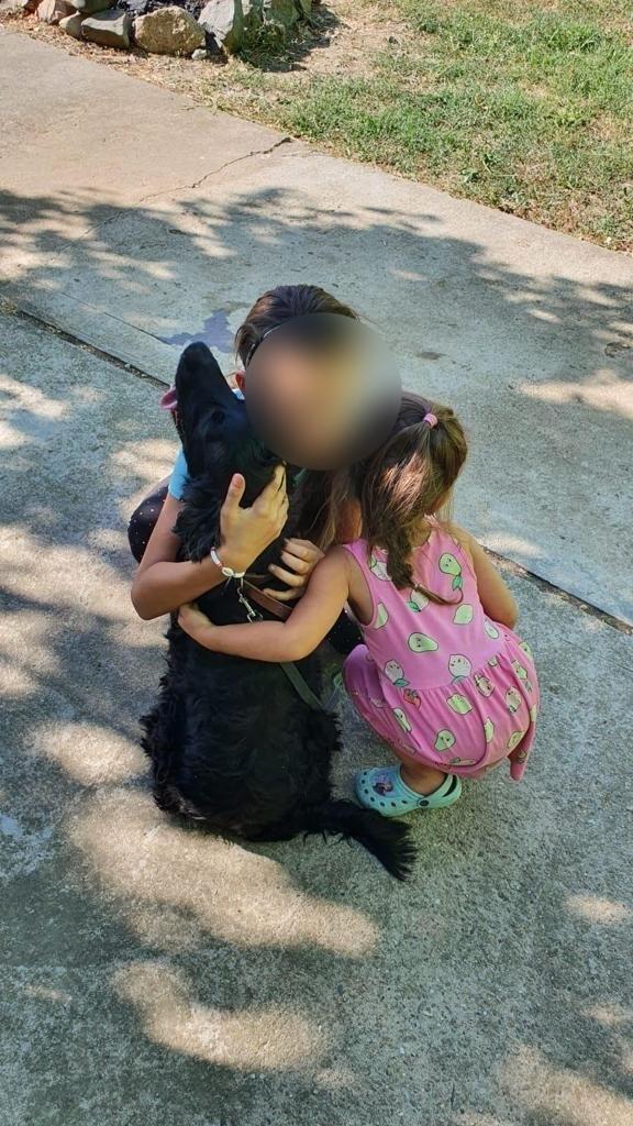 Un câine dispărut a fost găsit, după un an, la 60 de kilometri. Cine l-a dus înapoi familiei din Arad. GALERIE FOTO