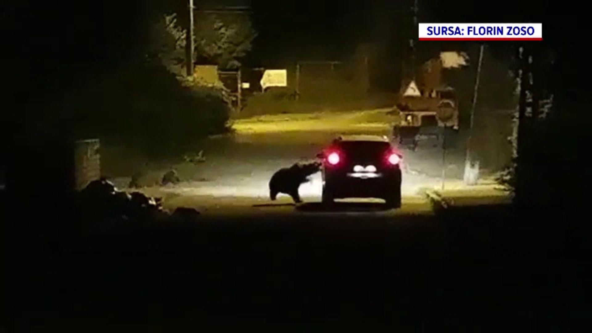 O ursoaică și trei pui au fost filmată pe o stradă din Bușteni cum atacă o mașină în mișcare