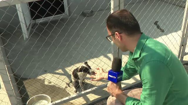 Adăposturile de câini din București și Ilfov sunt pline. Cei care îi abandonează riscă pedepse aspre