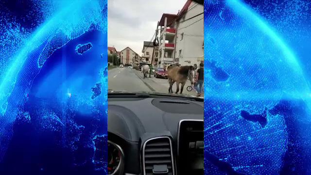 Caii se plimbă nestingheriți pe străzile din Florești. Ce au pățit proprietarii