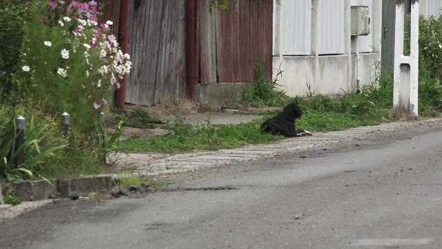 Un câine din Mureș își așteaptă de doi ani stăpânul în fața curții. Omul a murit fulgerător