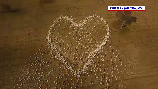 Modul inedit prin care un fermier i-a adus un omagiu unei rude moarte