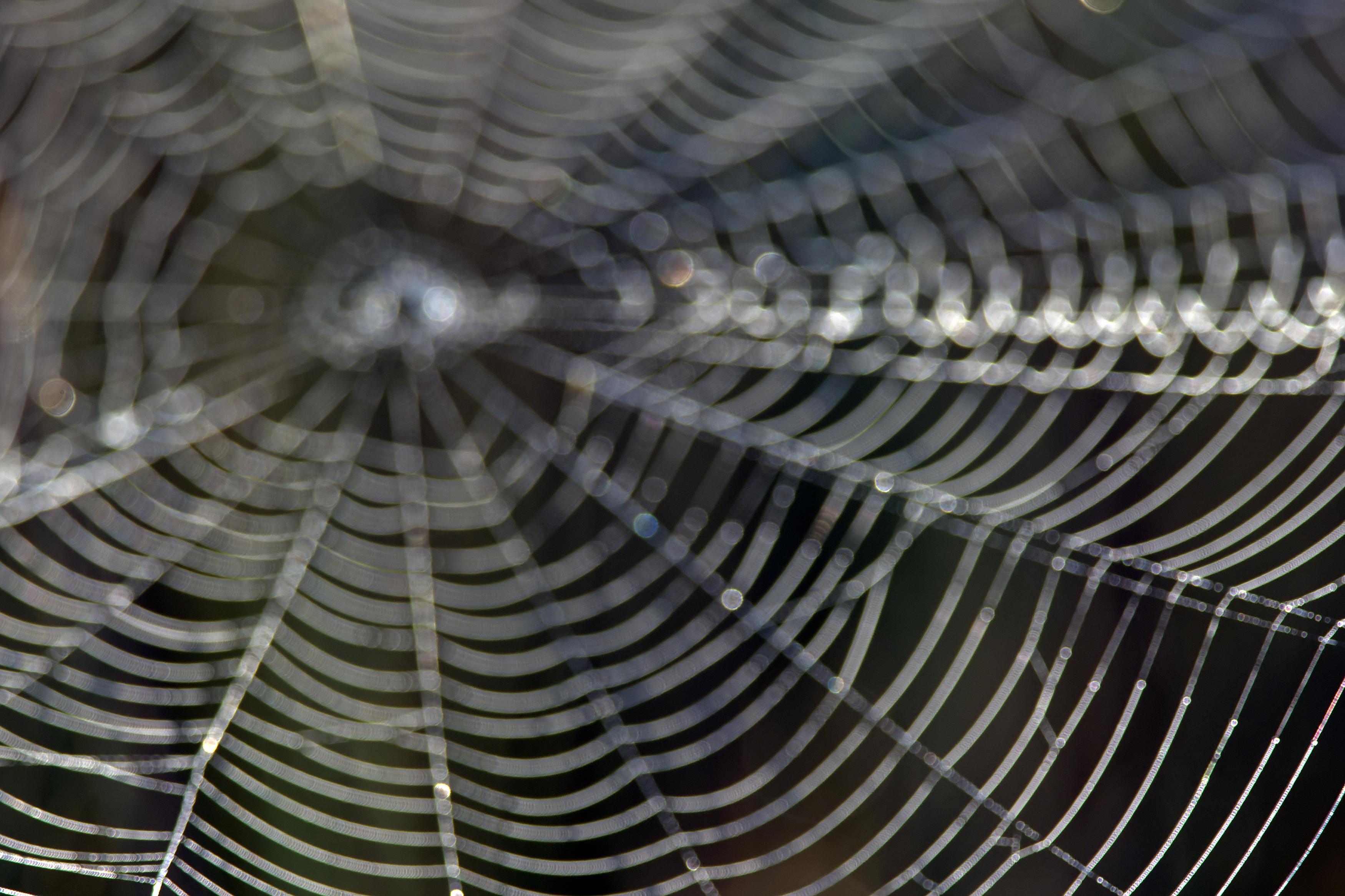 Urmează invazie de păianjeni imenși în casele din Marea Britanie