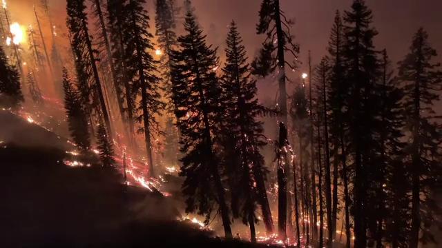 Continuă incendiile de vegetație în Statele Unite. Focar uriaș la granița statelor California și Nevada