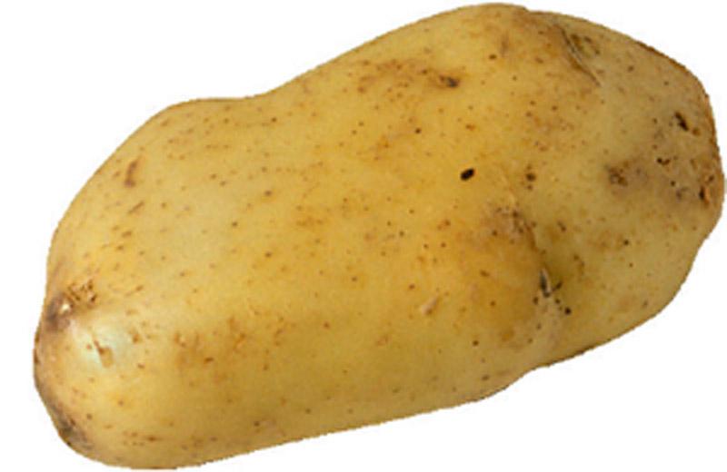 Un fermier din Marea Britanie a descoperit in gradina sa un cartof in forma de sani