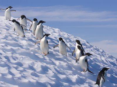 Ti-ar placea sa ai un job la Polul Sud?!