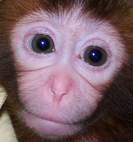 Cum au reusit cercetatorii iranieni sa trimita o a doua maimuta in spatiu