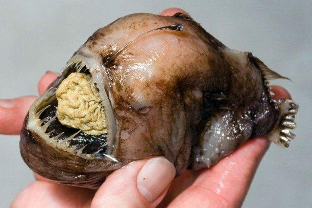 Adevarate mistere subacvatice: vezi o galerie foto cu pestii diavol!