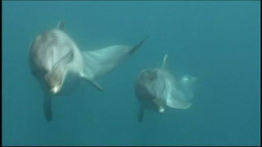 Povesti cu final fericit pentru animale chinuite. Delfinii Tom si Misha, printre invingatori