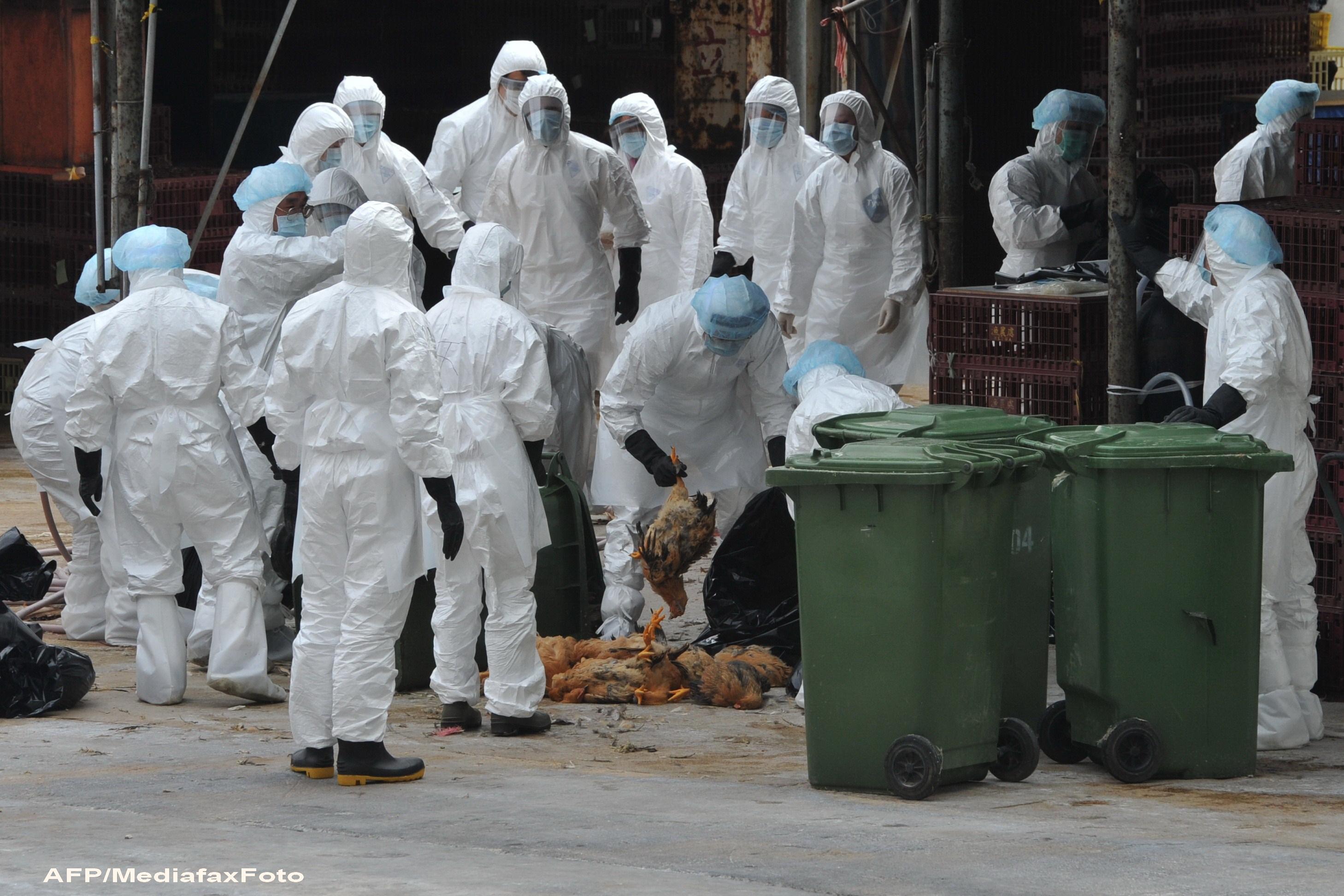 Gripa aviara a provocat moartea unui barbat din China. Este primul caz dupa 18 luni