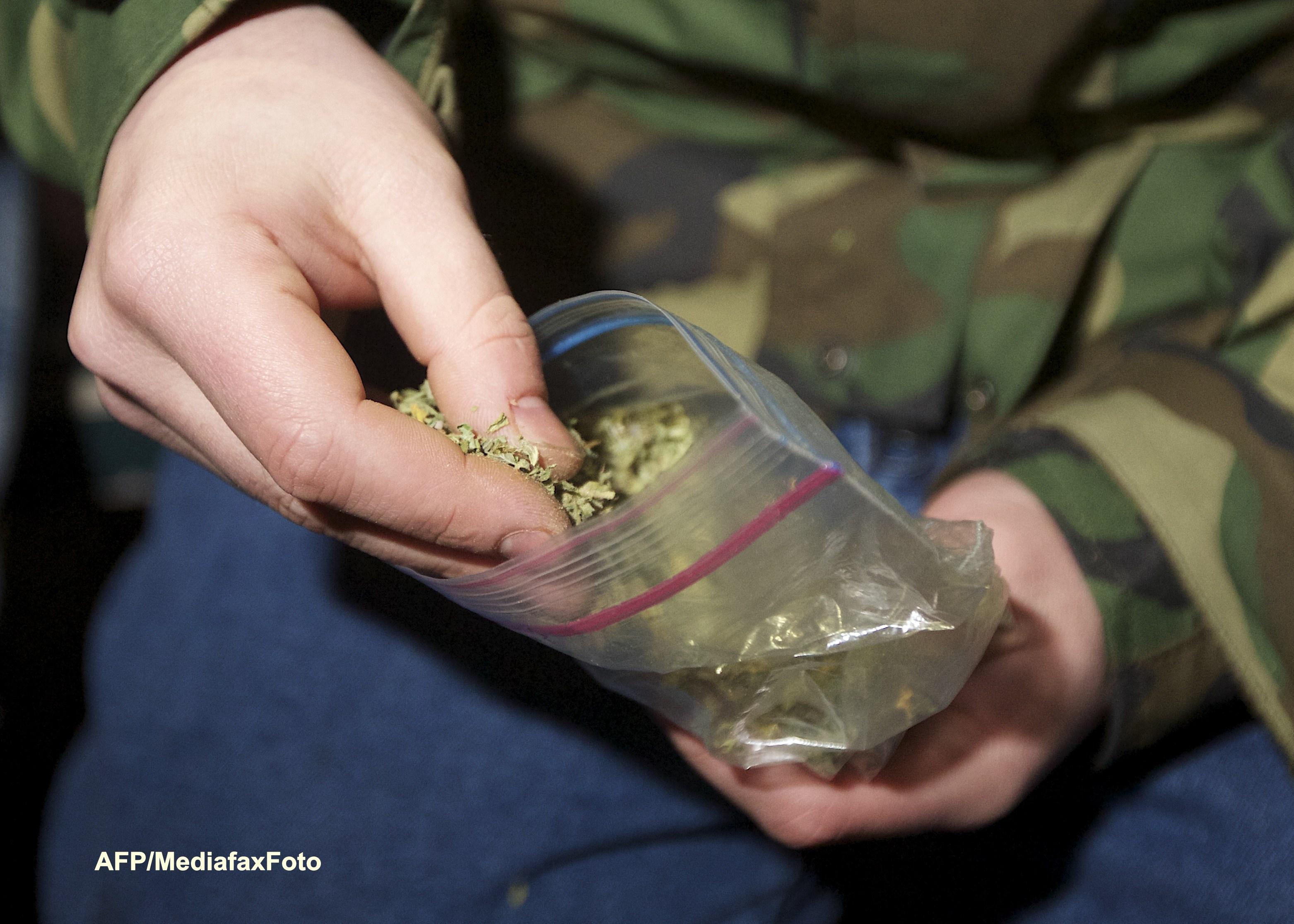 Breaking Bad, varianta reala. Cum a ajuns un cuplu de britanici sa produca tone de marijuana