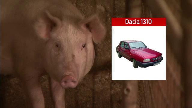 Marea bursa a porcului de Craciun. Romanii sunt dispusi sa dea la schimb si un iPhone sau o Dacie