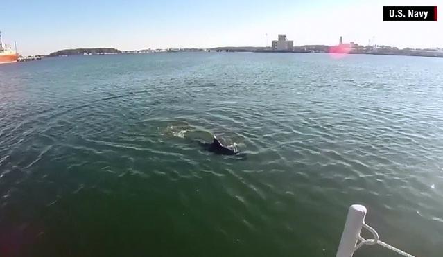 Drona in forma de peste a Marinei militare americane. Robotul poate depista orice pericol subacvatic