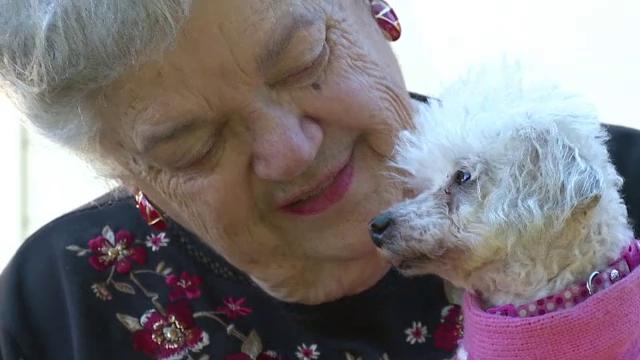 Regasire miraculoasa intre o femeie si cainele sau, dupa 9 ani de cand animalul a disparut. Cum a ajuns inapoi la stapana