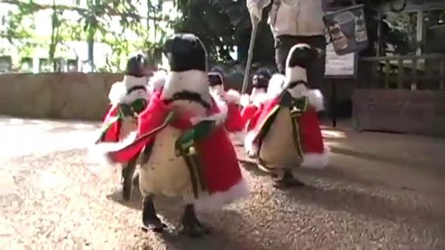 Defilare in straie festive a pinguinilor de la un parc acvatic din Japonia. Accesoriul purtat pentru a iesi in evidenta