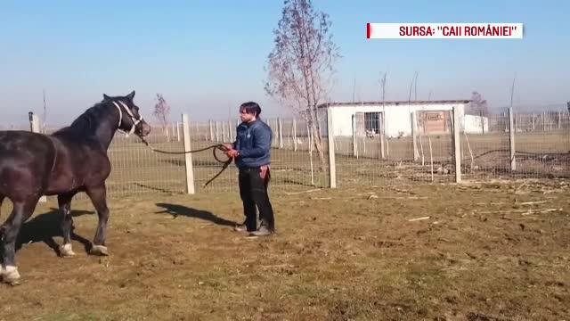 In urma cu 1 an, Denis Stefan salva un cal care urma sa ajunga pe mesele italienilor. Ce s-a intamplat intre timp cu Uma