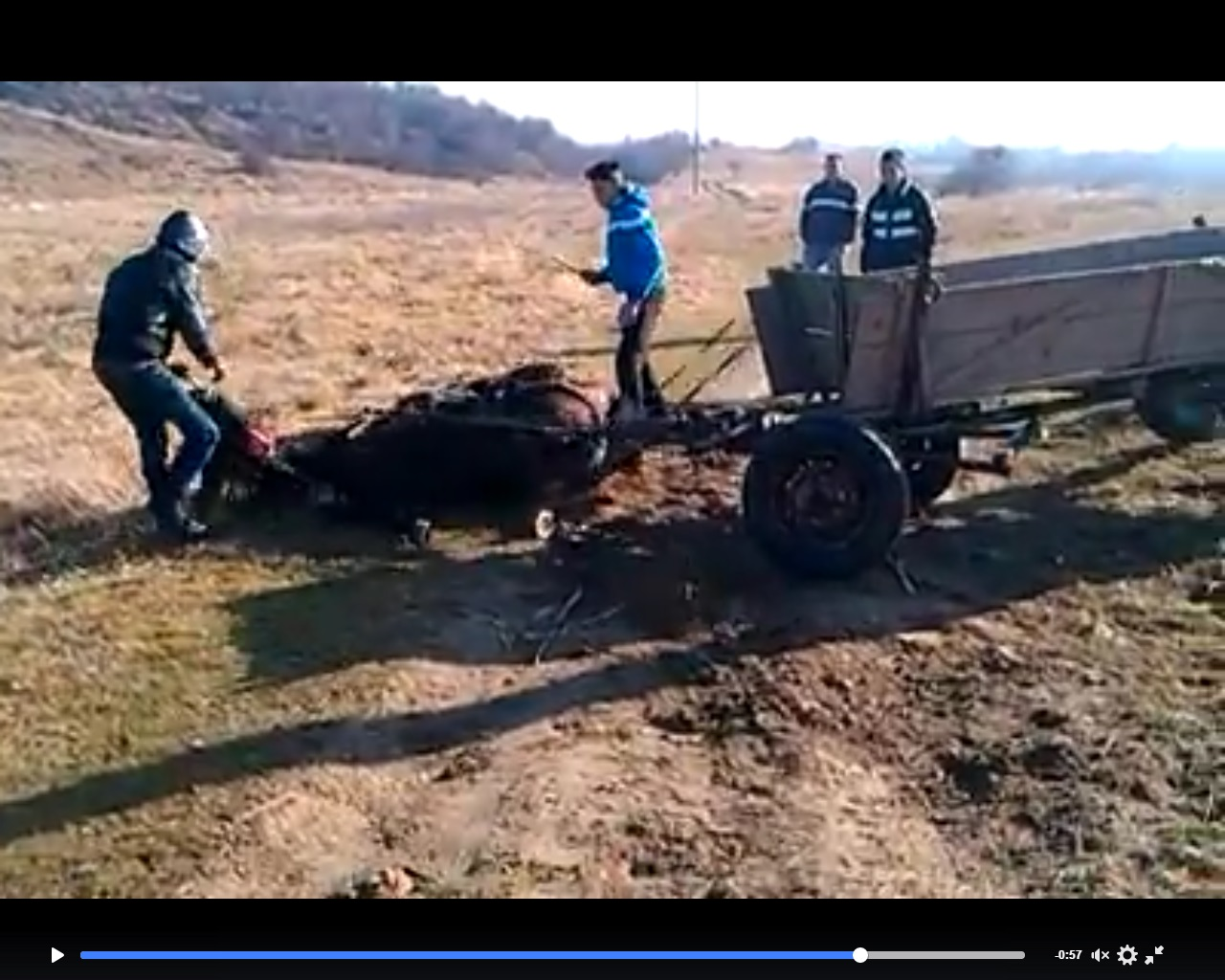 Patru tineri din Dambovita tortureaza cu cruzime un cal inhamat la caruta. Reusise sa scape, dar l-au legat din nou. FOTO