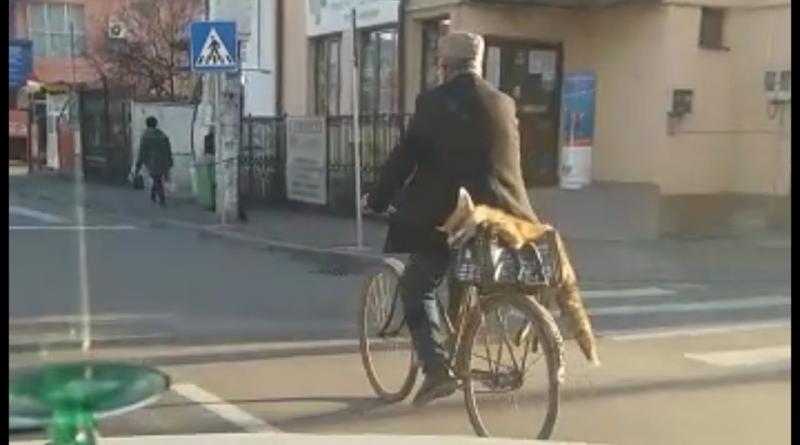 Un bărbat s-a ales cu dosar penal, după ce a plimbat o vulpe moartă prin oraș