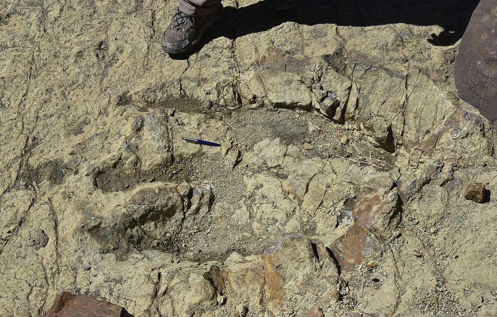O nouă specie de dinozaur, descoperită în zona deşertului egiptean, descifrează un mister antic