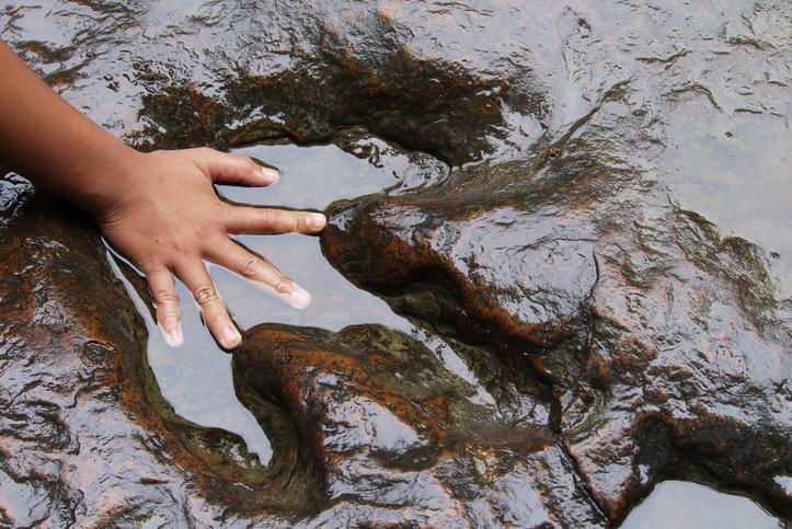 O echipă de muncitori din China ar fi descoperit ouă de dinozaur. FOTO