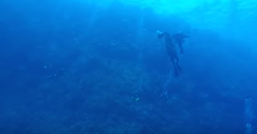 Momentul șocant în care un scafandru este atacat de un rechin. Ce a urmat. VIDEO