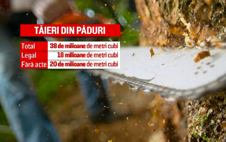 S-au taiat paduri de 2,5 miliarde € in Romania. Mai mult de jumatate din bani, facuti din ilegalitati