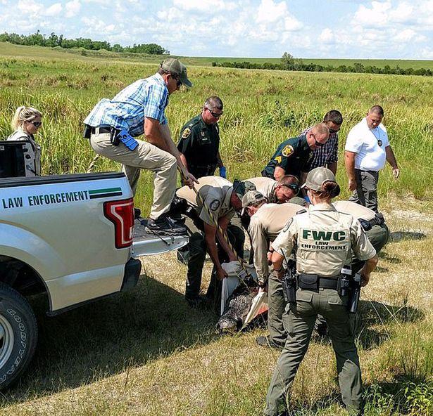 Resturile unui bărbat, găsite în stomacul unui aligator. Cauza morţii e însă şi mai bizară