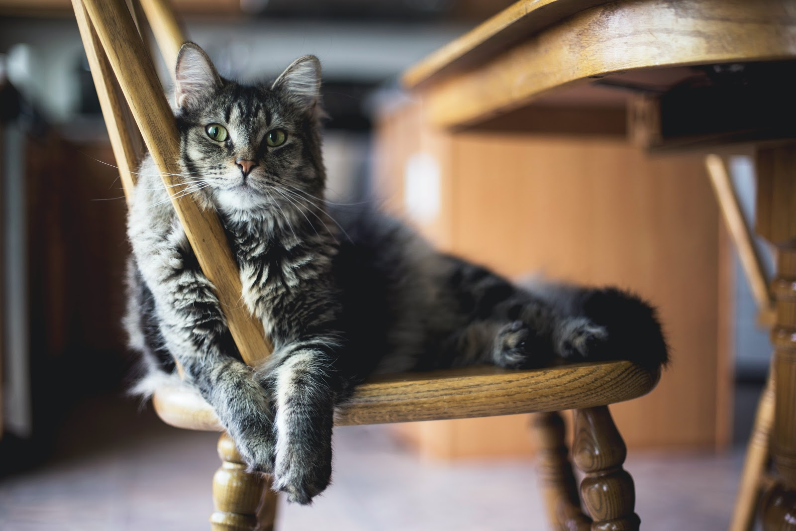 (P) Hrănirea pisicii - 5 principii de bază pe care ar trebui să le știi