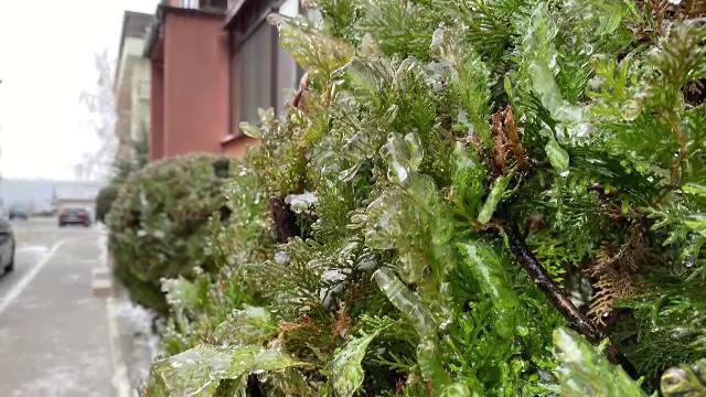 Ploaie înghețată în județele din nordul țării. Pomii, acoperiţi de o pojghiţă ca de sticlă