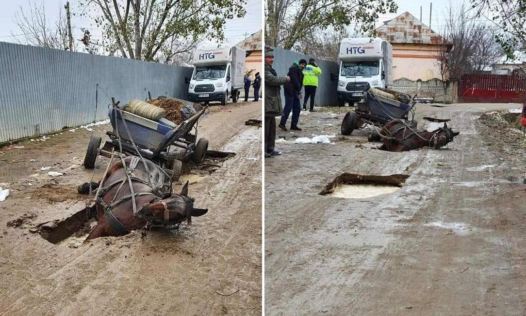 FOTO. Un cal a căzut într-o groapă plină cu apă, săpată în mijlocul drumului. Ce spune primarul